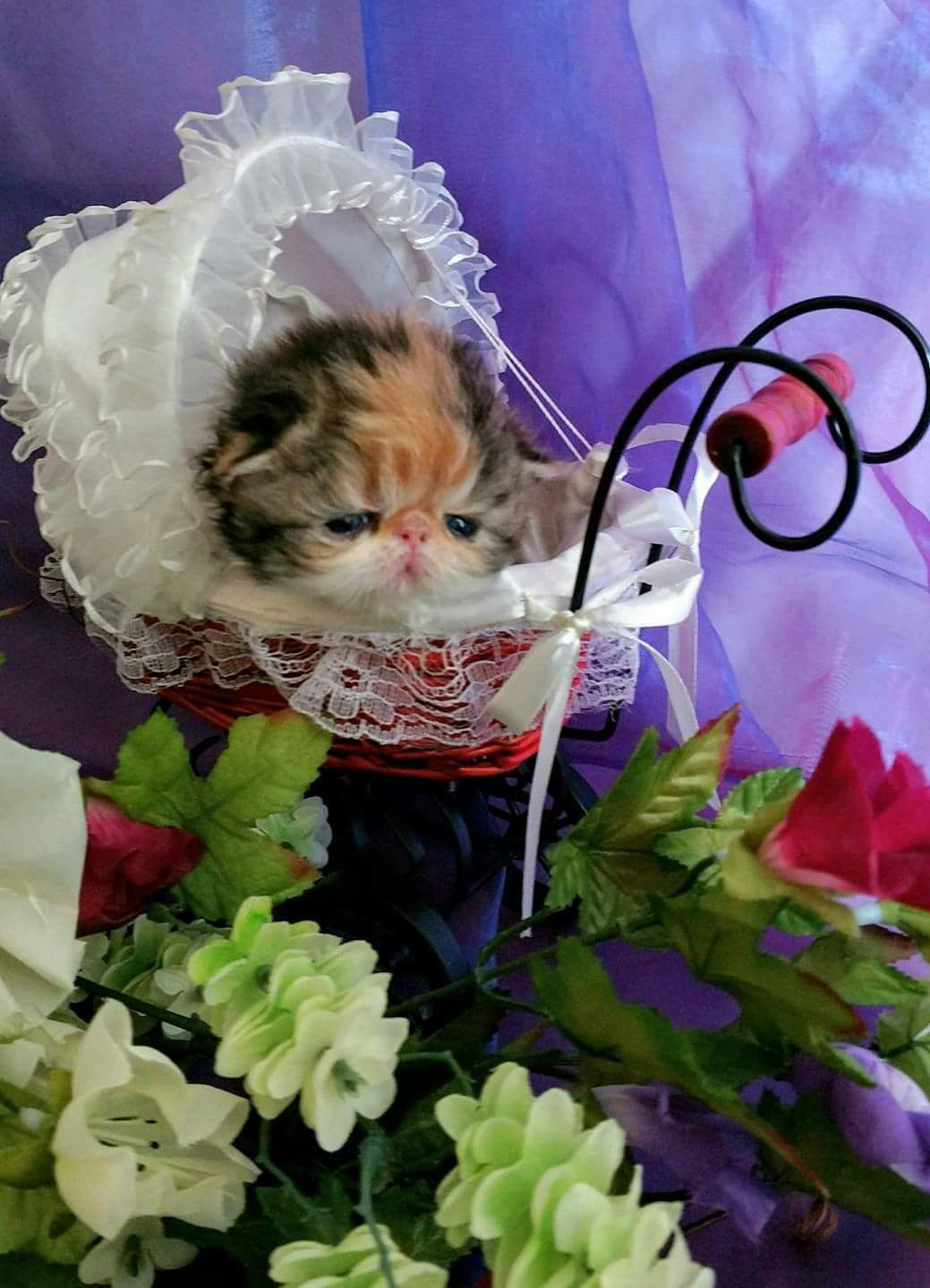 Oh My Precious Girl This Little Doll Became Karolina Kaleidoscope Kk Gosh I Need Some Babies I Miss Everything About Them Time Photo Love Photos Kittens