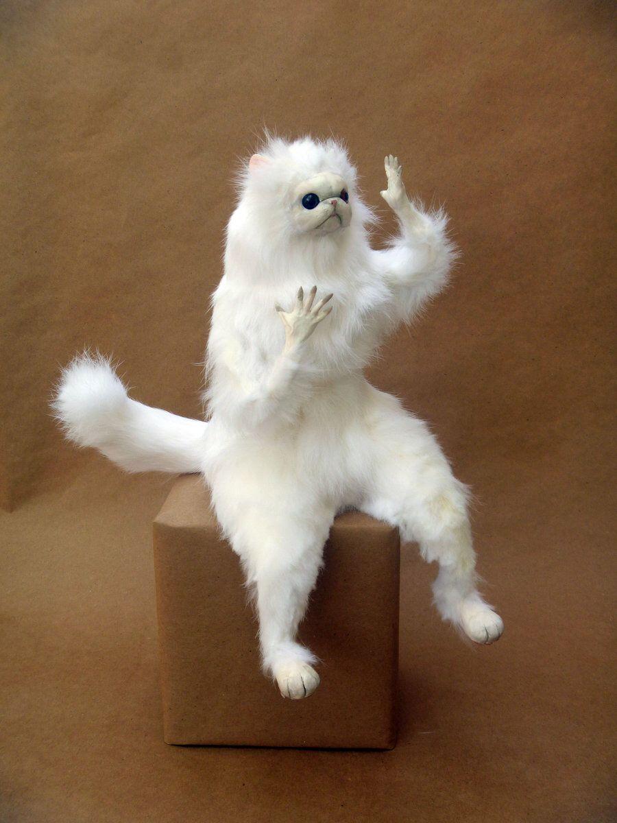 Persian Room Guardian Cat lol | Memes/Funny Ish | Cats ...