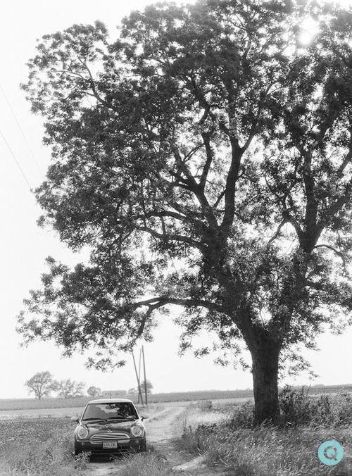 mini cooper tree
