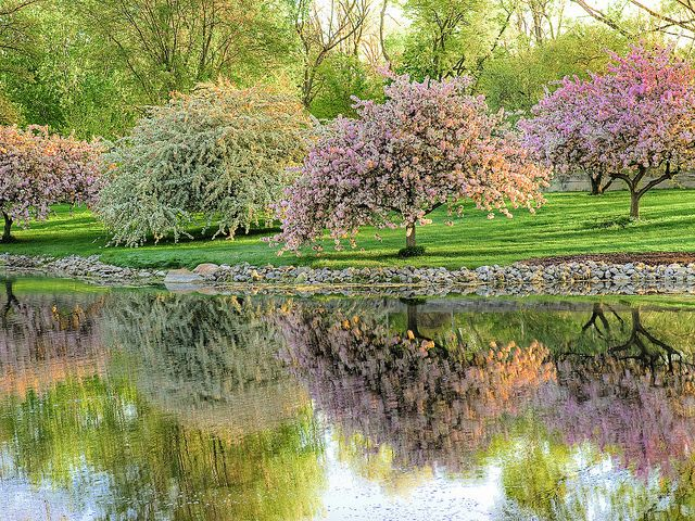 Blooming Fruit Trees Reflected In Spring Near Toledo Ohio Springtime Pictures Spring Garden Flowering Trees
