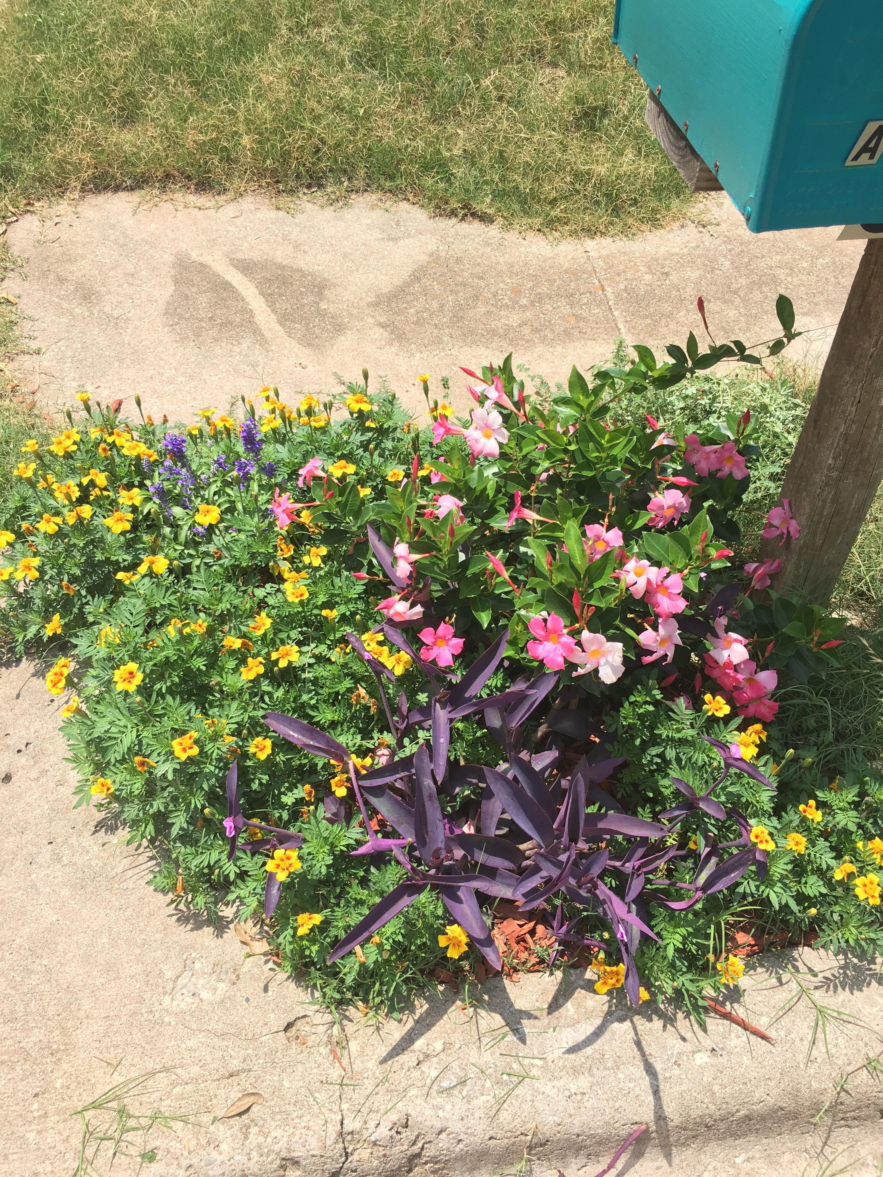 tiny flower bed in front of