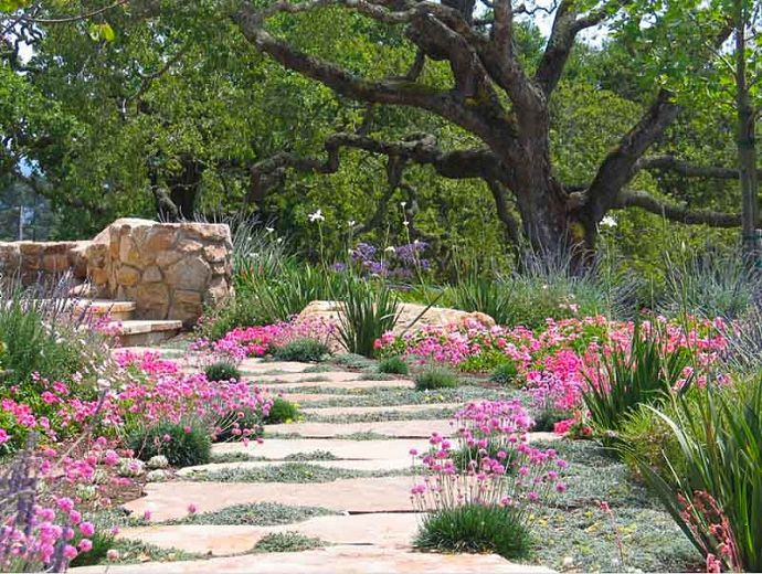 Who wouldn't want to stroll along this beautiful flagstone pathway? Interspersed with a planned wilderness of Mediterranean plants, its palette of long-lasting pastel colors includes low maintenance and water wise evergreen perennials.