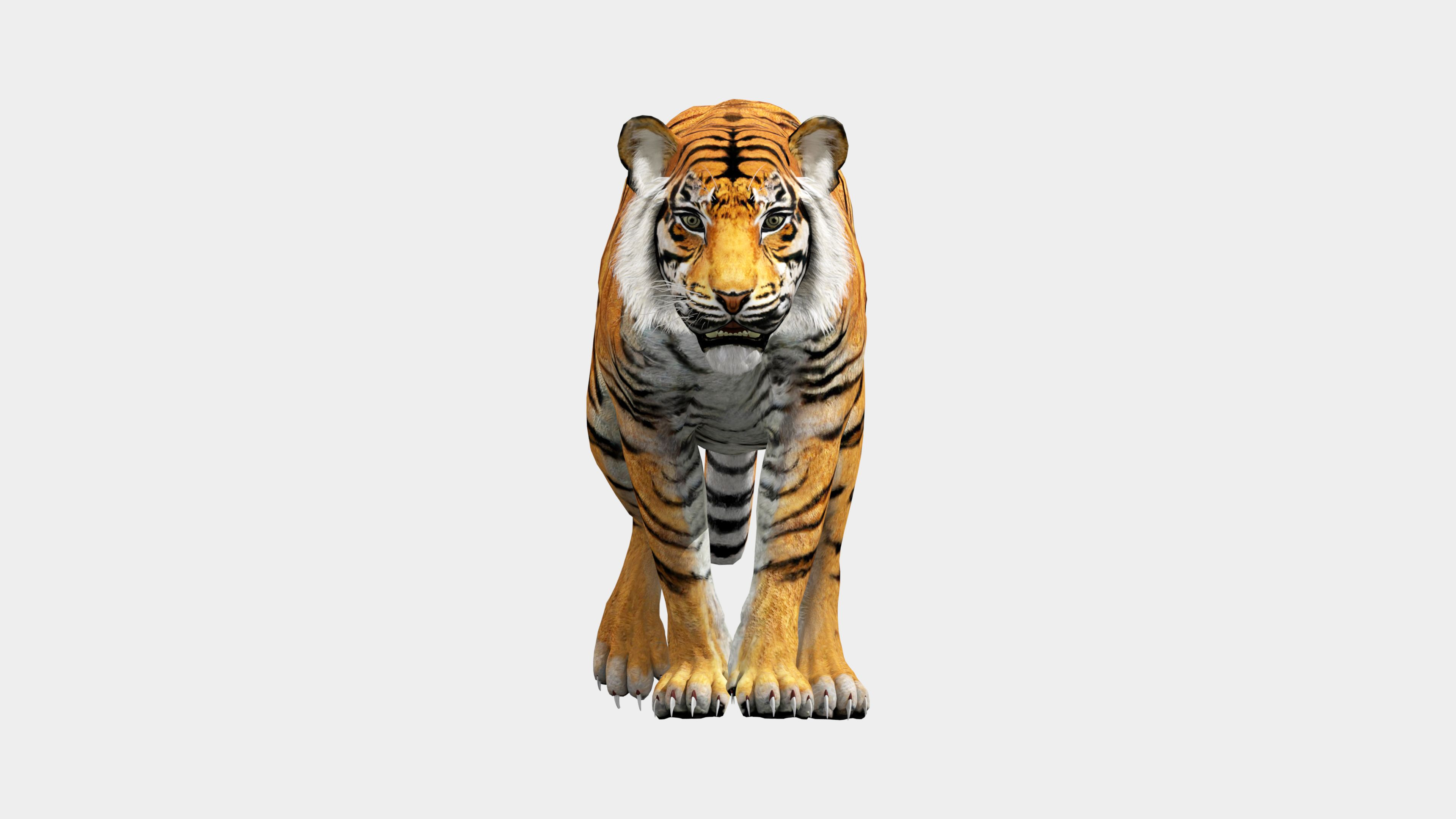 Animated Tiger Animation, 3d animation, Lion sculpture