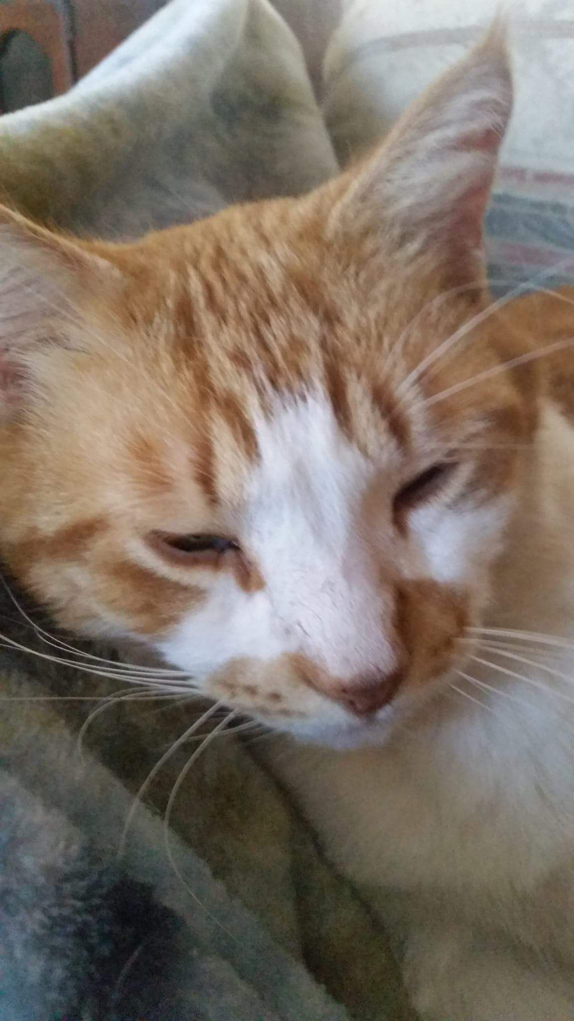 Roberta Doner Challman Ct Lost Pets Missing In Thomaston Ct Day 3 Male Fixed Travels Litchfield Street Center Grove And Know Lost Cat Losing A Pet Cats