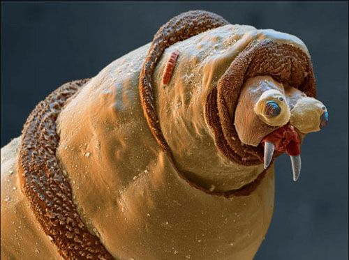 Image Asticot asticot. | aliens that live on earth | pinterest | electron