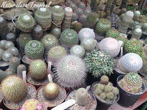 Colección de cactus redondos