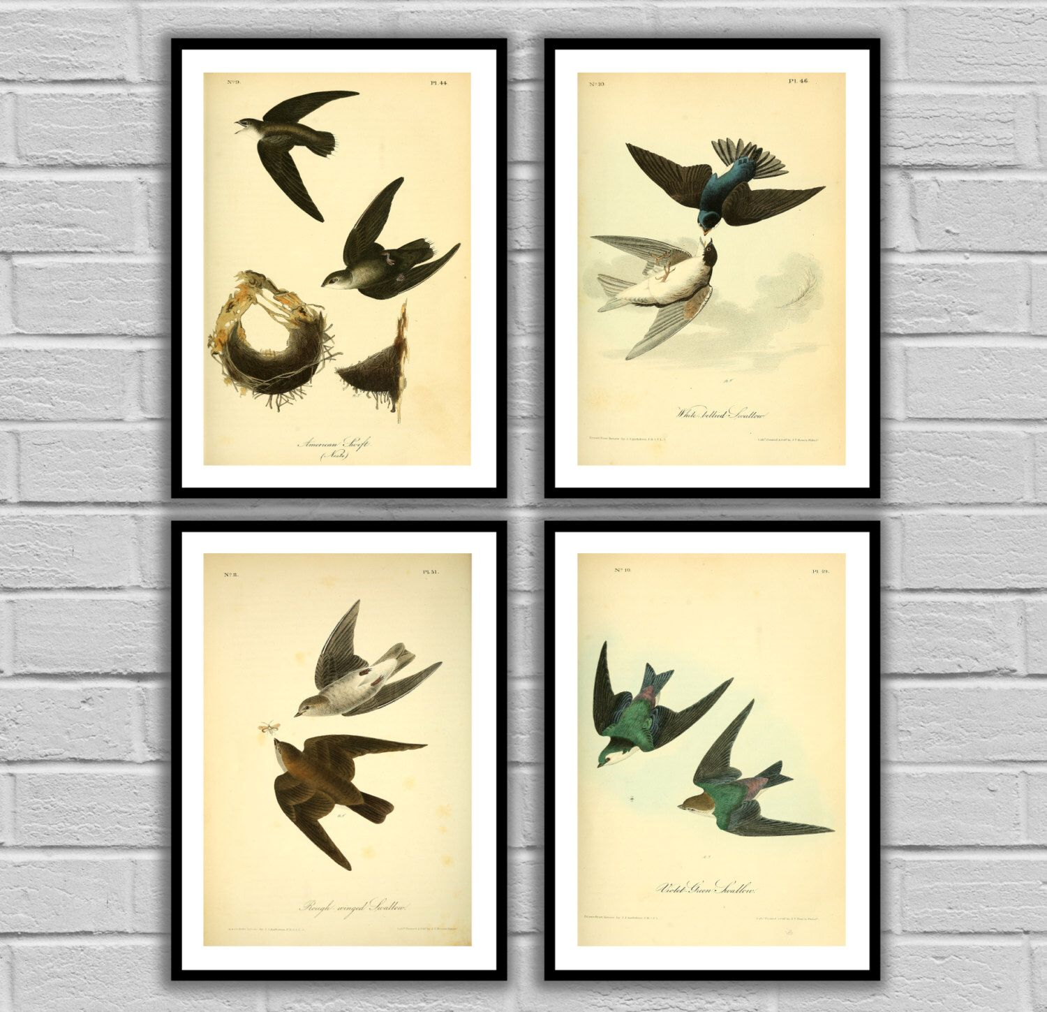 Generous Swallow Wall Art Pictures Inspiration - The Wall Art ...