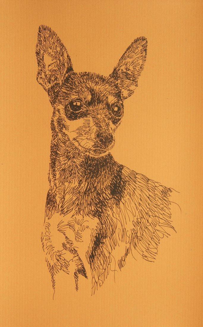 miniature pinscher   Me   Pinterest   Zwergpinscher, Hunde und Tier
