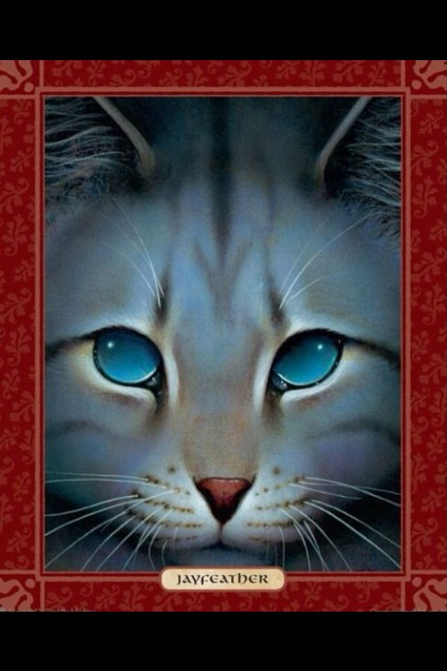 Jayfeather Hes My Favorite Character D And Not Because He