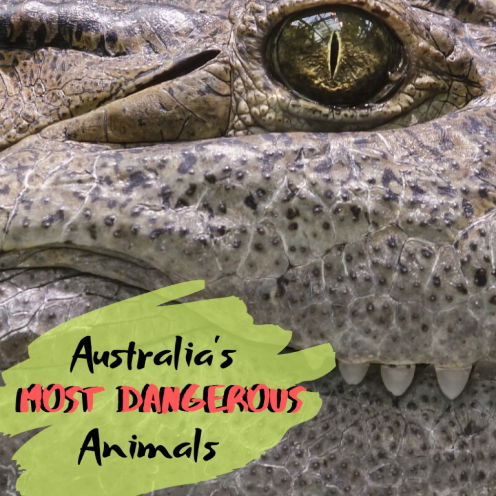 Top 10 Most Dangerous Animals in Australia in 2020