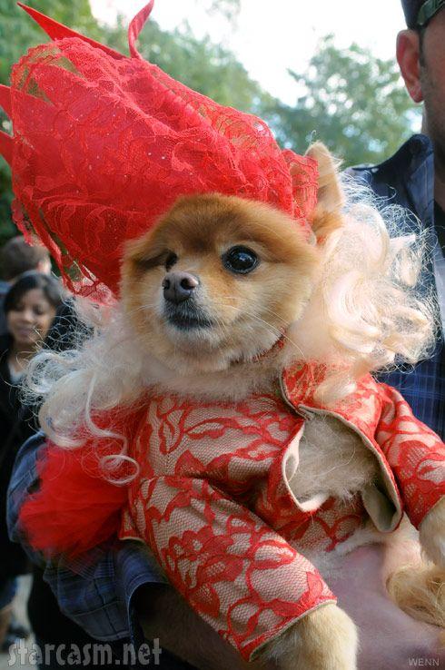 Photos Top 10 Dog Costumes At 2011 Tompkins Square Park Halloween
