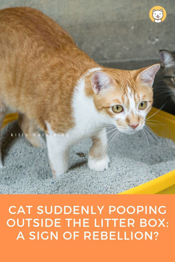 Cat Suddenly Pooping Outside The Litter Box A Sign of