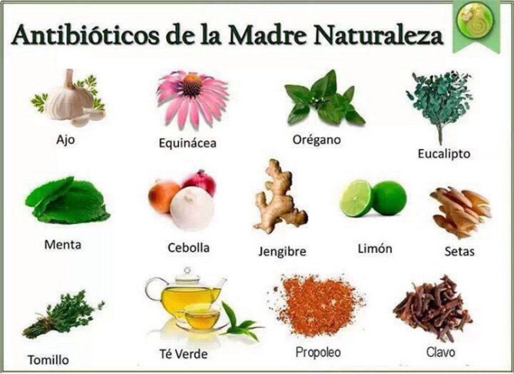 Trabajo De Plantas Medicinales Para Ninos Buscar Con Google Natural Antibiotics Natural Remedies Herbalism
