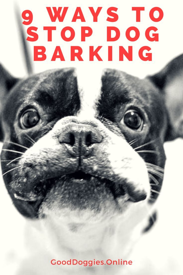 How To Stop A Dog From Barking When You Leave House Good Dog