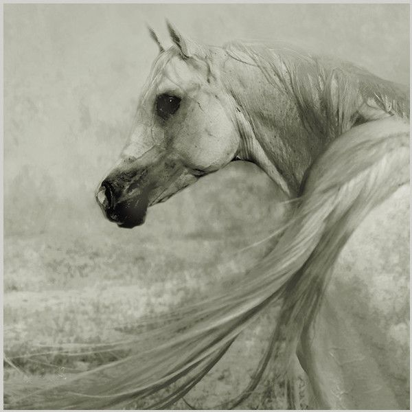 Классные животные от Wojtek Kwiatkowski (20 фото 4.19Mb) ❤ liked on Polyvore featuring horses, animals and backgrounds