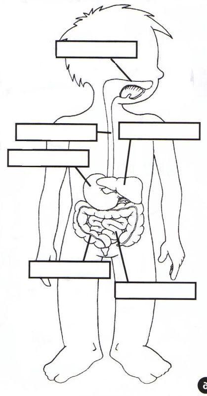 Las partes del cuerpo humano WIKIPEKES para niños | Lecciones ...