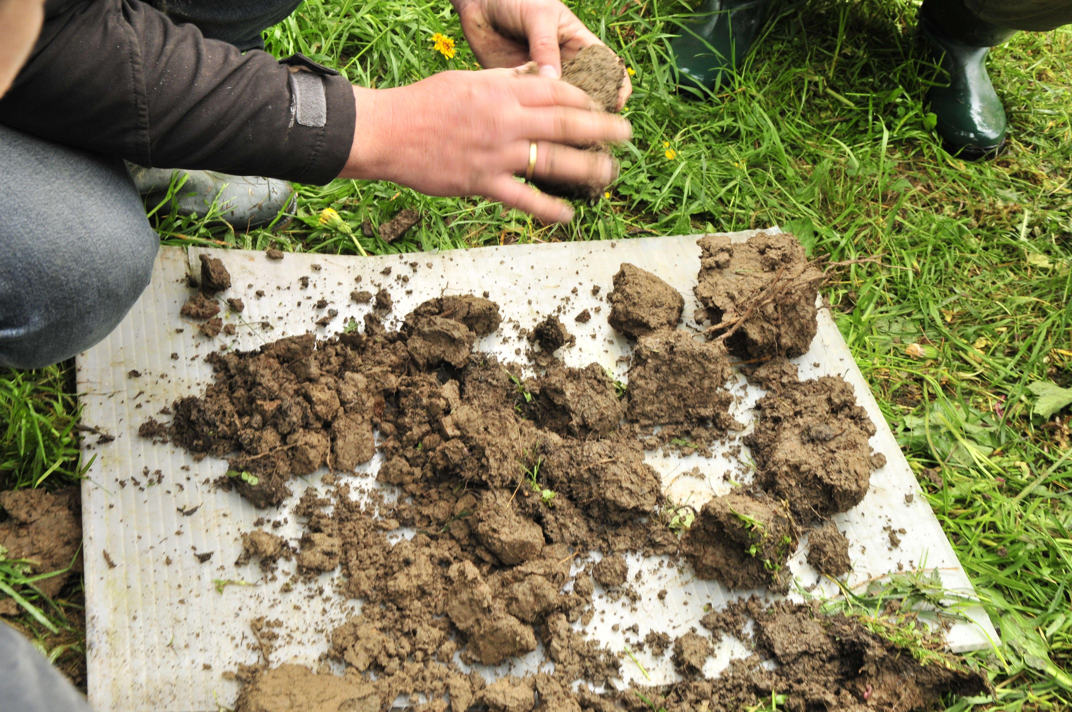 Bodenprobe Im Permagarten Pflanzen Permakultur Garten