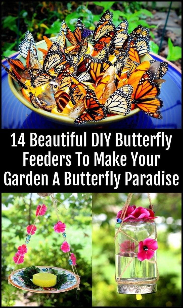 Photo of Attract hundreds of beautiful butterflies to your garden with these lovely feede…