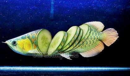 Cara Edit Foto Manipulasi Hewan (Dengan gambar) Hewan