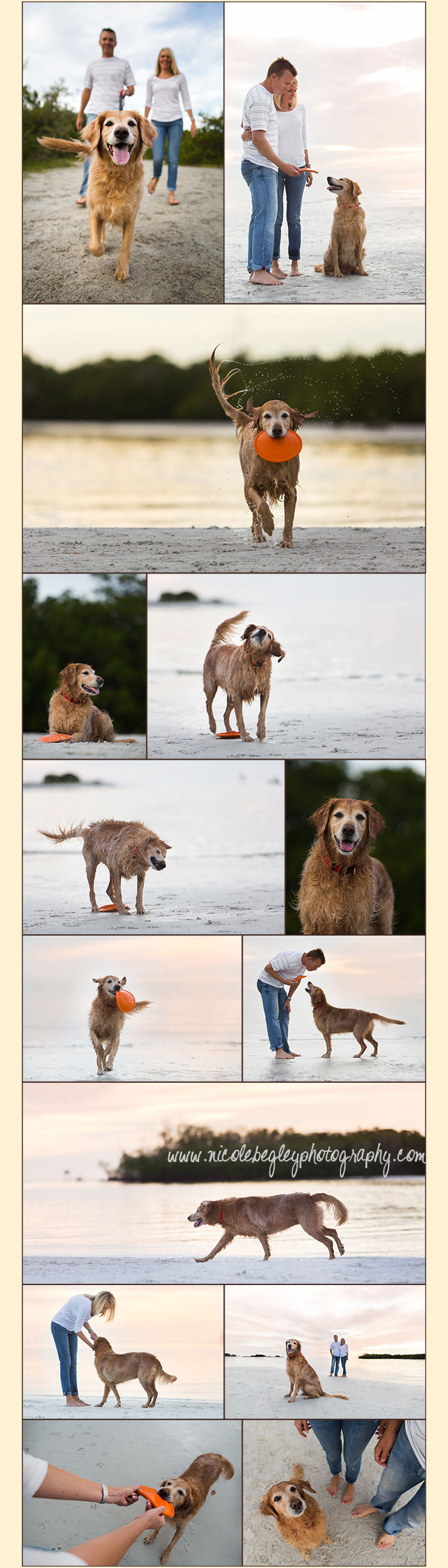 Dog Photography On A Beach Pet Lifestyle Photography South West