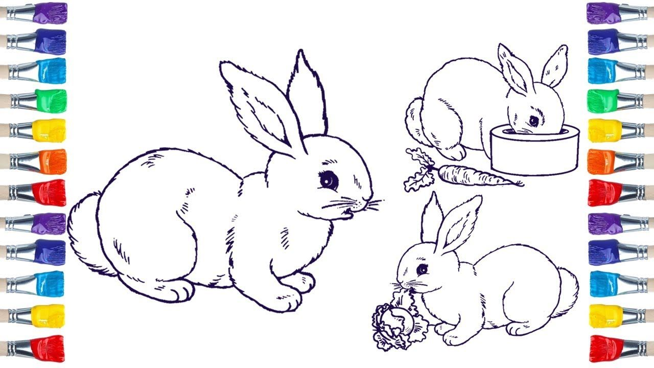 How To Draw A Bunny Family Easily Draw Colour For Kids Coloring For Kids Drawings Sketch Book