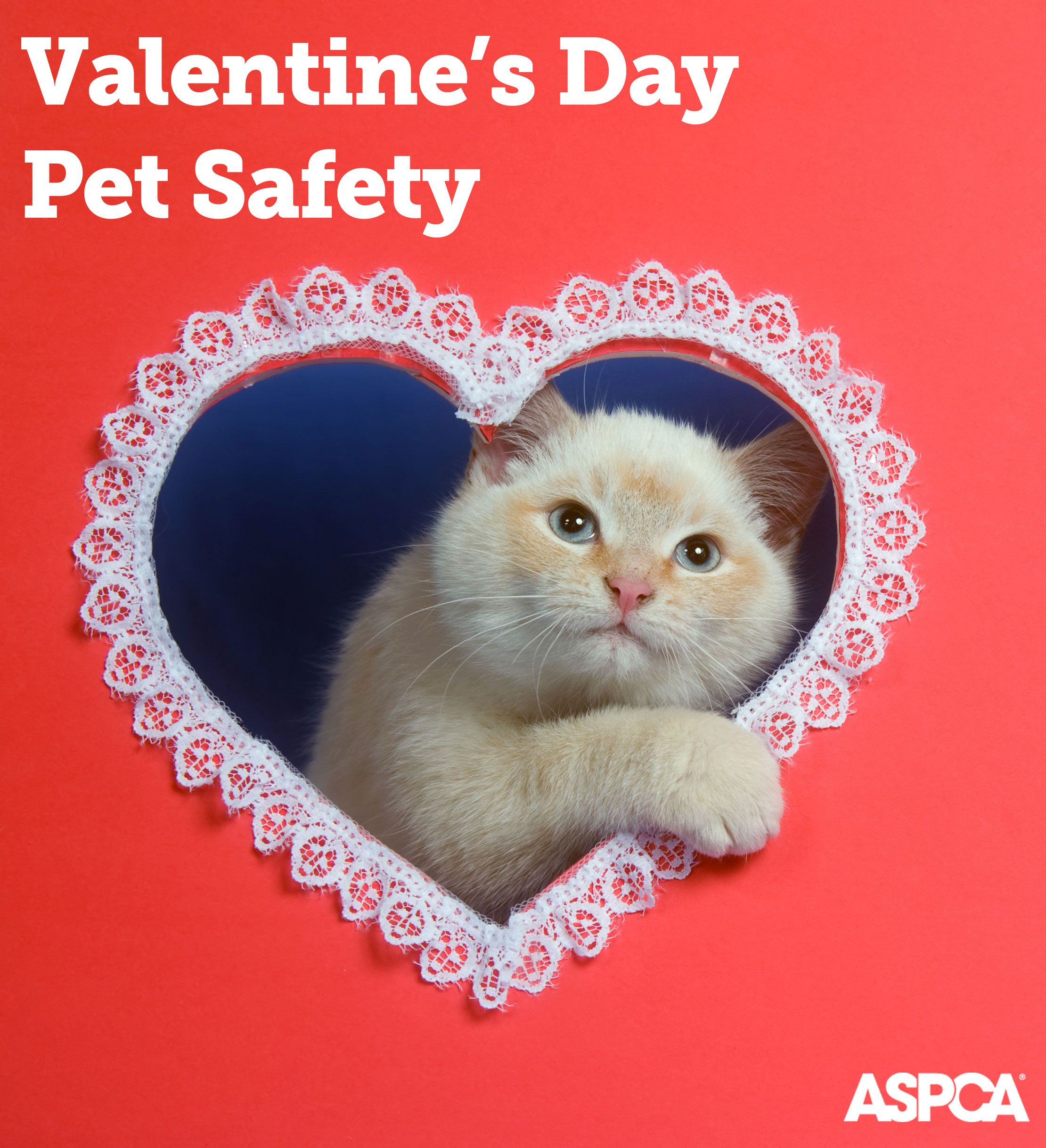 Keeping Pets Safe On Valentine S Day Pet Holiday Animal Valentine Love Your Pet