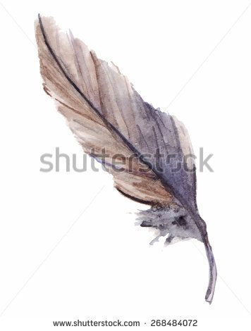 Watercolor feather single isolated