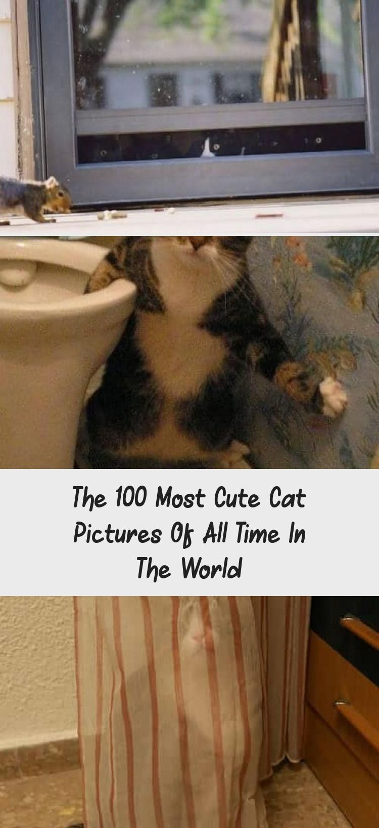 The 100 Most Cute Cat Pictures Of All Time In The World - CATS #whitekittens Squeeeee! white kitten licks window -  kitty memes cat humor funny joke gato chat #CuteCats #FunnyCats #Cat #Kittens #CatHumorArt #DogVsCatHumor #CatHumorLove #CatHumorLaughingSoHard #CatHumorBirthday
