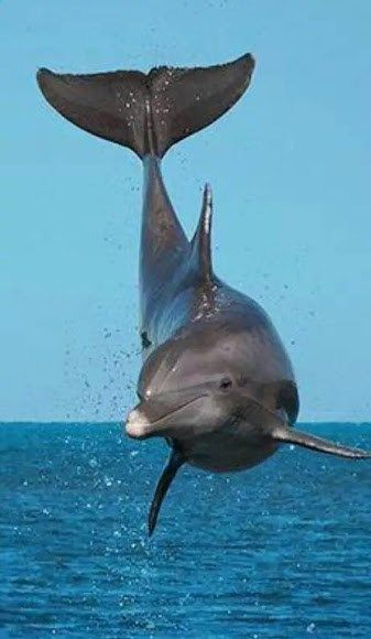 How awesome and cleaver are Gods creatures, the Dolphin.