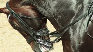 Horses can NOT do their best when they are screaming in pain!!  Do you agree??