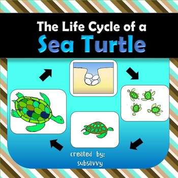 Sea Turtle Life Cycle Science Resources On Tpt Sea