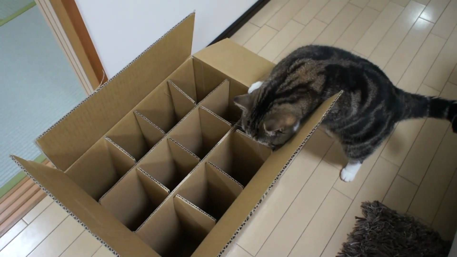 The box which Maro can't enter (Native Japan love this cat
