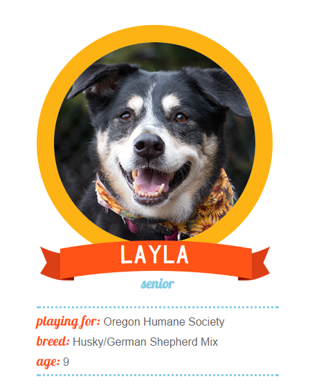 Between Swim Team Nose Work And A Budding Modeling Career Layla Is A Sweet And Lovable Jill Of All Trades When She S Not Keep With Images Humane Society Nose Work Pets