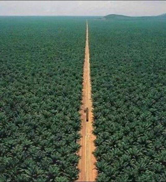 مزرعة الراجحي أكبر مزرعة نخل في العالم والتي تحوي 200 ألف نخلة - القصيم Alrajhi date farm the largest farm in the world it contain more than 200,000 date palm trees - Alqassim -Saudi Arabia.