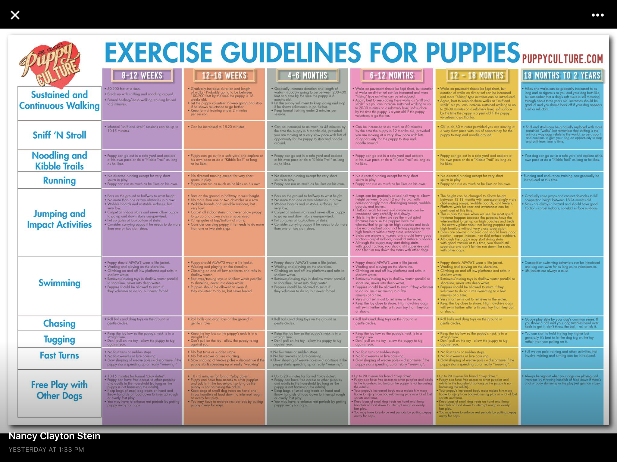 Exercise guide for puppies Puppy training, Training your