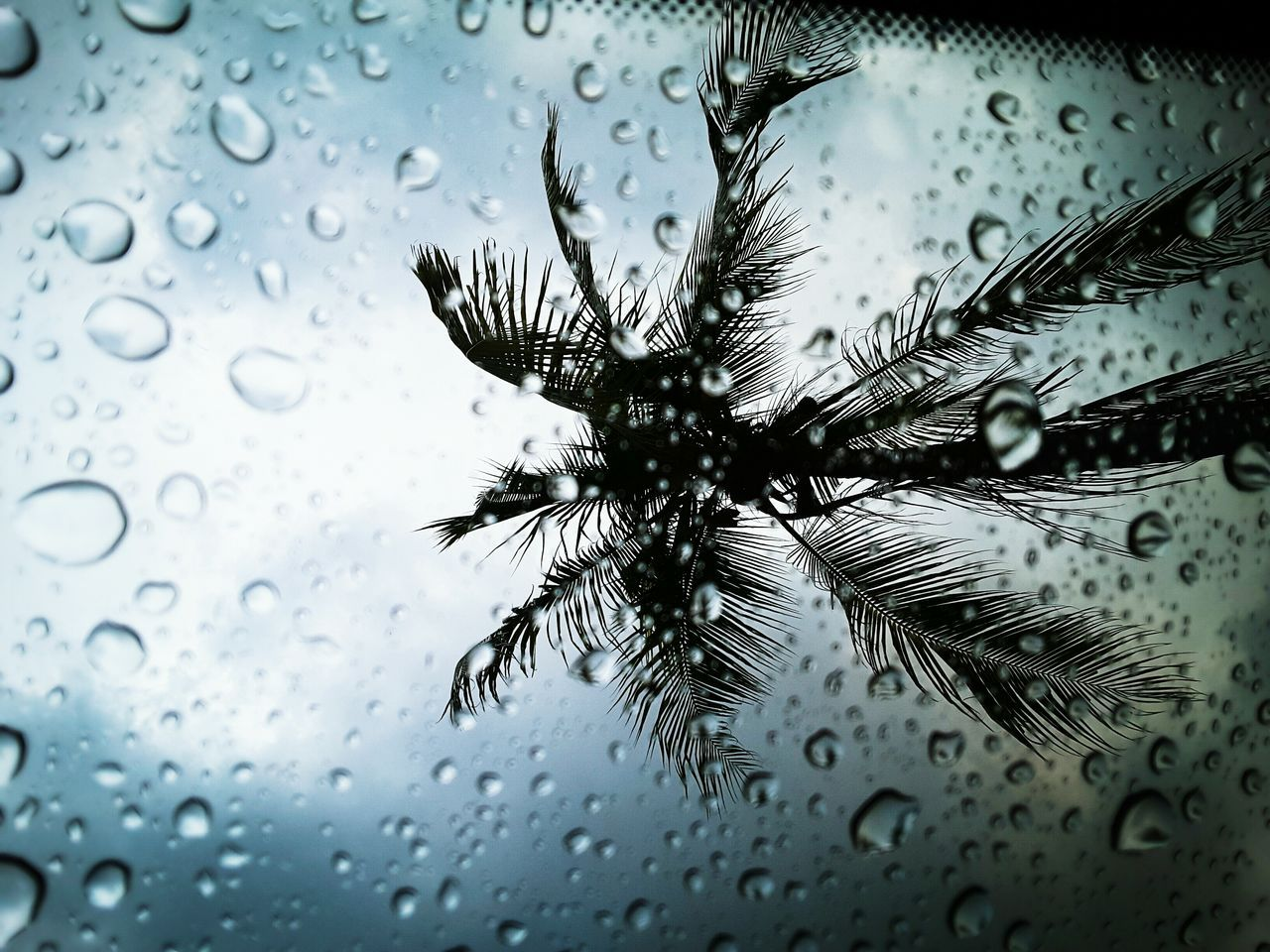 glass - material, drop, water, transparent, close-up, window, no people, full frame, backgrounds, fragility, nature, sky, refreshment, beauty in nature, day, droplet, frosted glass, purity, raindrop, web, spider web, freshness, outdoors