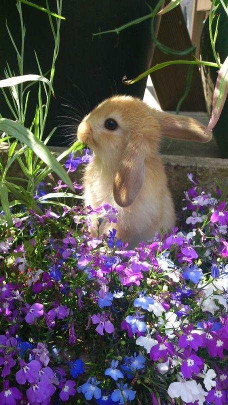 20 Fotos Von Tieren Die An Blumen Schnuffeln Susseste Haustiere Kaninchen Susse Tiere