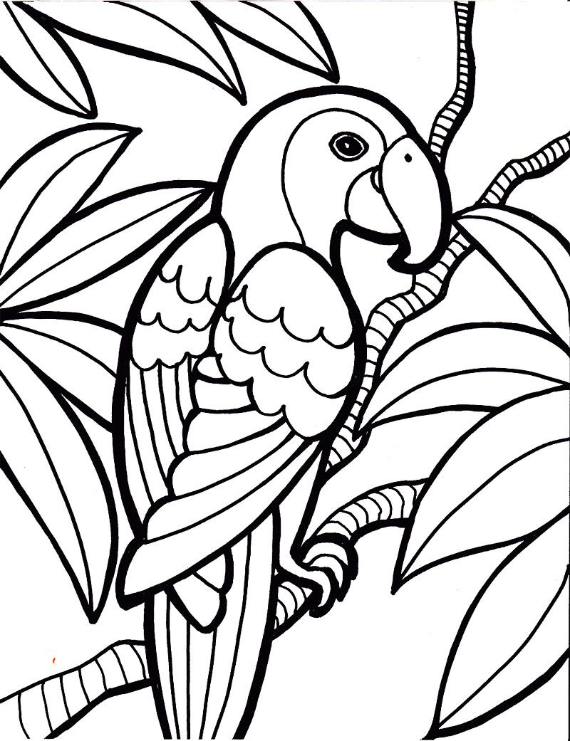 Parrot Bird Coloring Page  Kids Coloring Pages  Pinterest