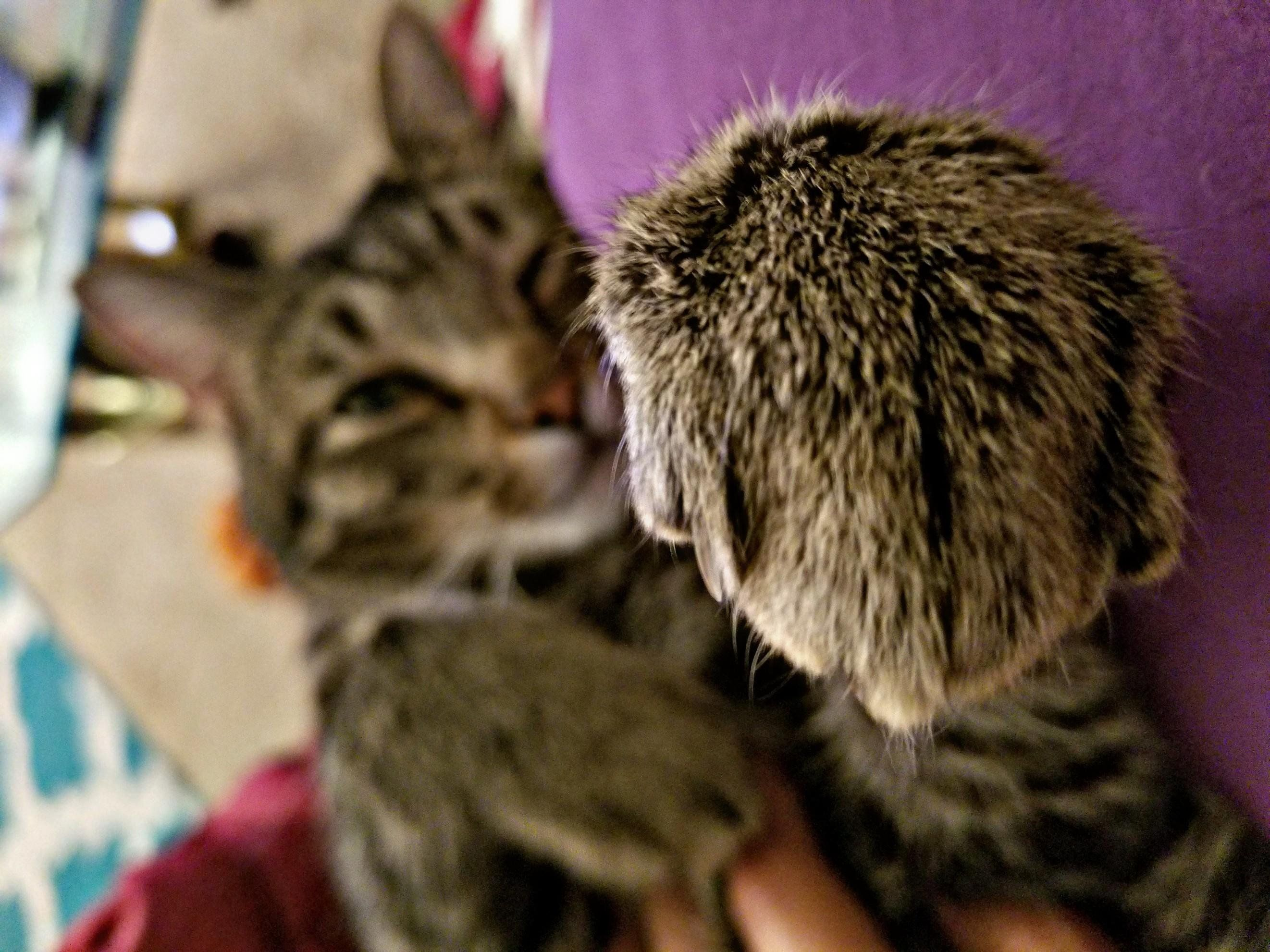 Your Hand My Dear I Ll Give It A Kiss Kittens Cutest Cute Animals Pet Clothes