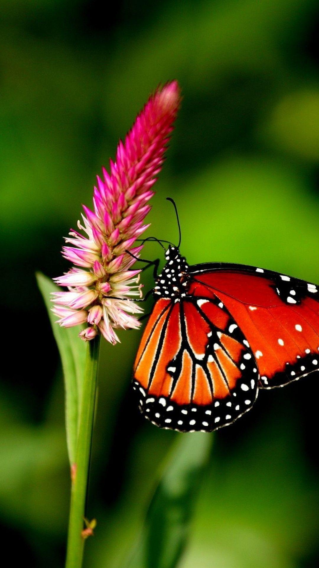iPhone Wallpaper HD Butterfly Butterfly wallpaper