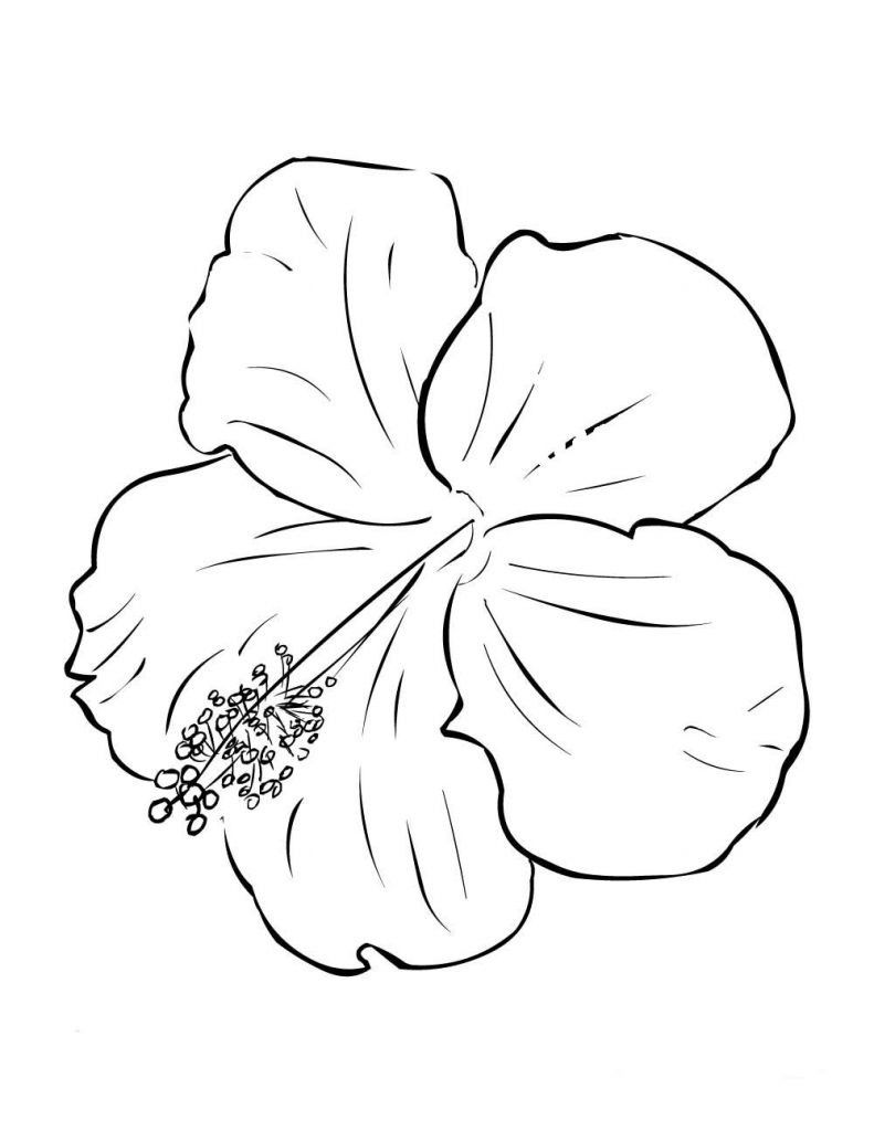 Hibiscus Flower Coloring Page Youngandtae Com Flower Drawing Hibiscus Flower Drawing Flower Coloring Pages