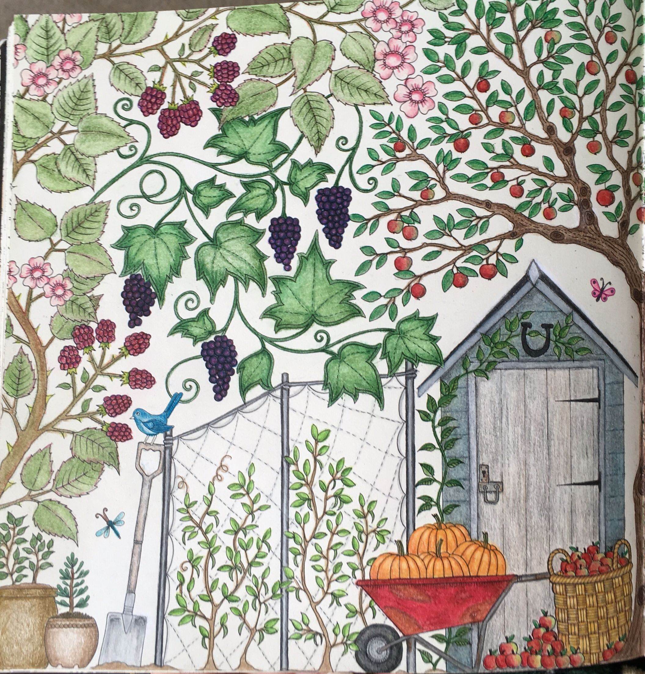 The secret garden coloring book finished - Secret Garden Coloring Book Prismacolor Colored Pencils