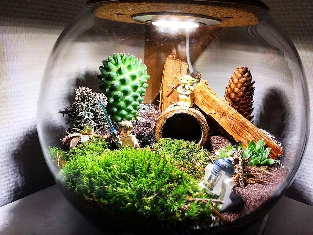 Das Kreative Potential Meiner Kunden Ist Unerschopflich Meisteryoda Und Lukeskywalker Erfullen Die Gaia Terra Mit Der Macht Terrascape Kunsthandwerk Resim