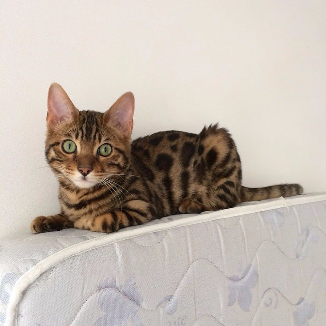 Fun Facts Did you know that cats have the largest eyes of any ...