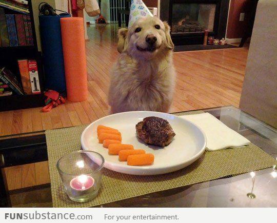 Birthday dog is pleased