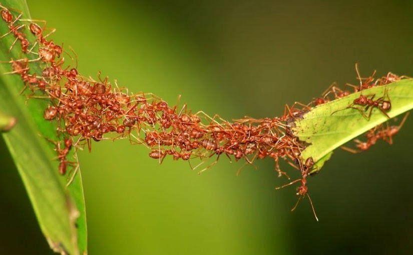 تفسير رؤية حلم النمل في المنام Fourmis Colonie De Fourmis Insectes