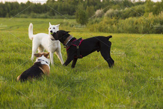 Three Dogs On A Walk Dog Behavior Dogs Dog Behaviorist