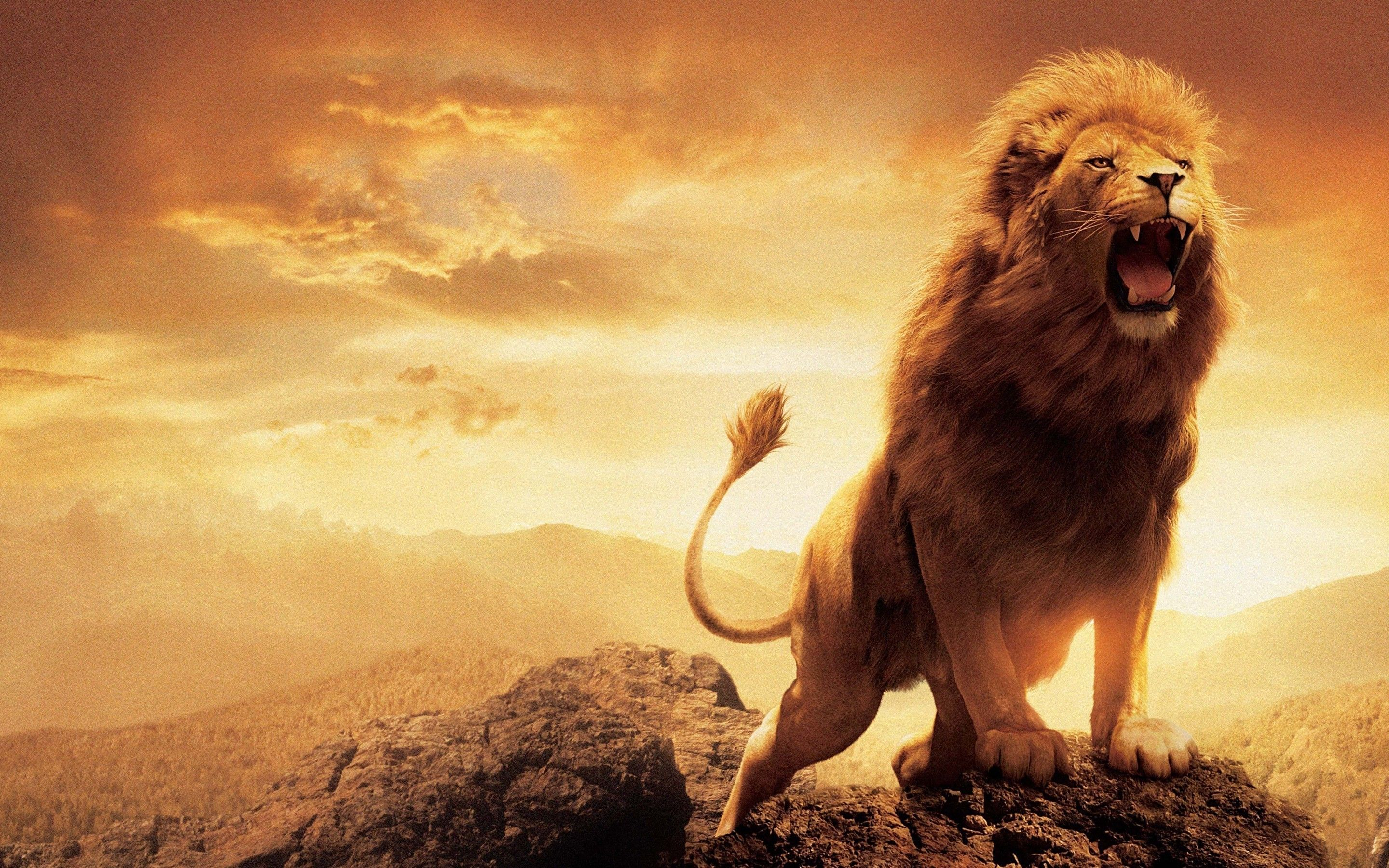 Most Inspiring Wallpaper Logo Lion - 62b30a6ae471c0e0132a89a3d238e971  Perfect Image Reference_366112.jpg