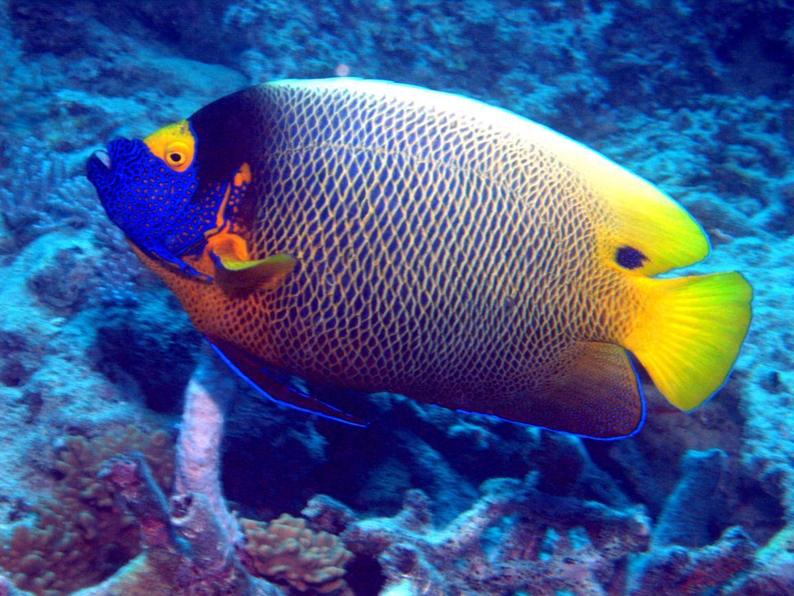 Colourful Google Search Colorful Fish Pinterest