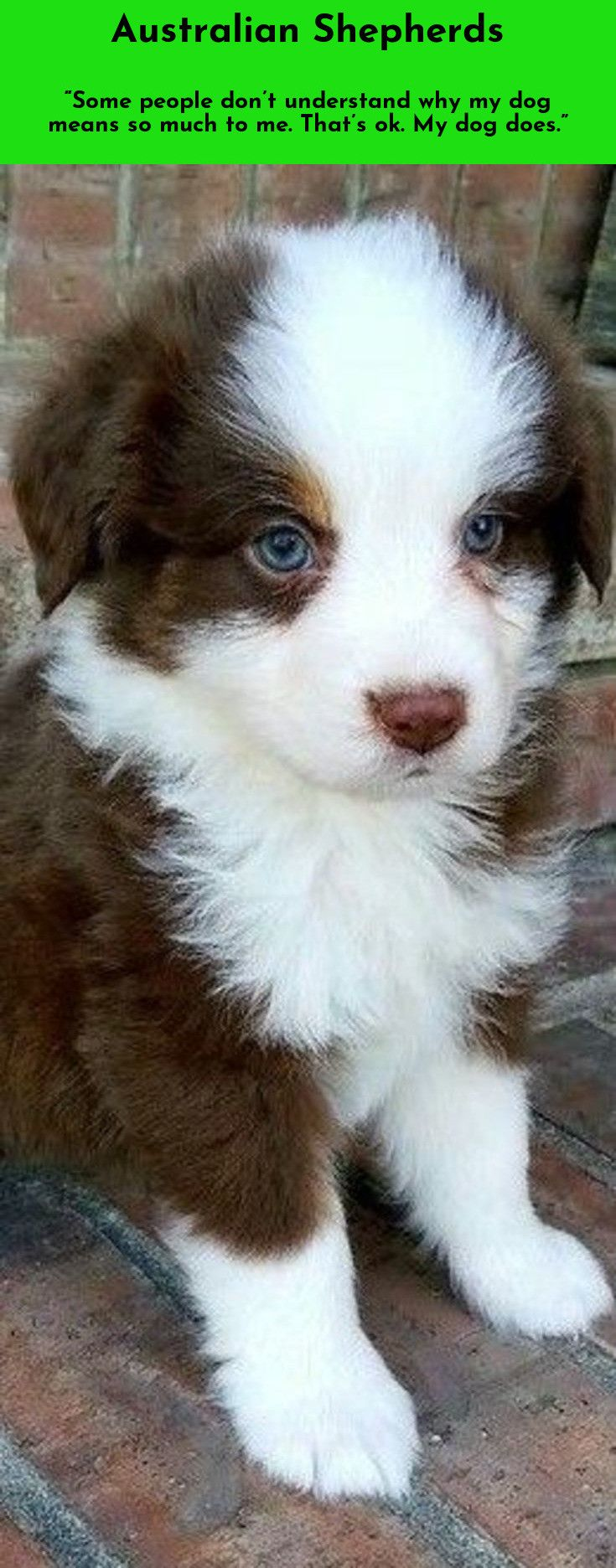 Acquiring A Dog May Be The Only Time A Person Gets To Choose A Relative Mordecai Siegal Australianshepherd Aussieshe Lustige Tierfotos Hunde Tier Fotos